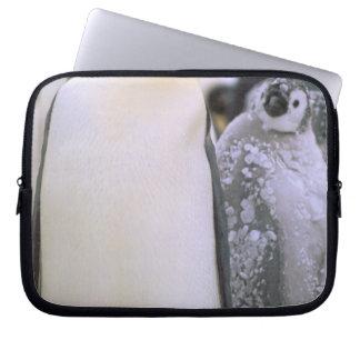 Antarctica, Antarctic Peninsula, Weddell Sea, 2 Laptop Sleeves
