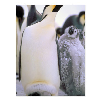 Antarctica, Antarctic Peninsula, Weddell Sea, 2 Postcard