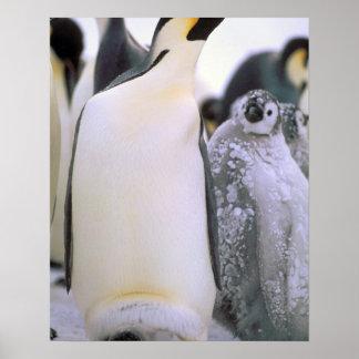 Antarctica, Antarctic Peninsula, Weddell Sea, 2 Print