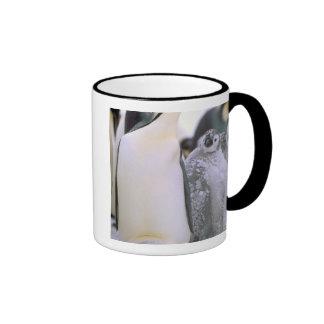 Antarctica, Antarctic Peninsula, Weddell Sea, 2 Ringer Mug