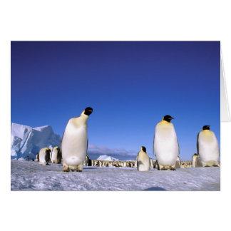 Antarctica, Antarctic Peninsula, Weddell Sea, 3 Greeting Card