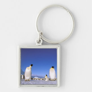Antarctica, Antarctic Peninsula, Weddell Sea, 3 Keychain