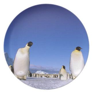 Antarctica, Antarctic Peninsula, Weddell Sea, 3 Dinner Plate