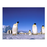 Antarctica, Antarctic Peninsula, Weddell Sea, 3 Postcards