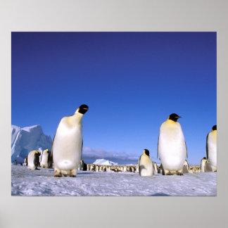 Antarctica, Antarctic Peninsula, Weddell Sea, 3 Posters