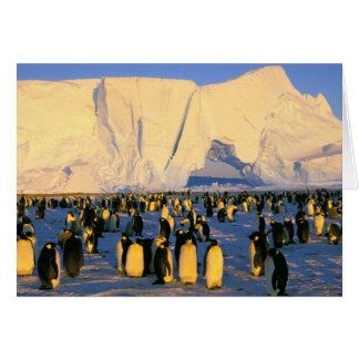 Antarctica, Antarctic Peninsula, Weddell Sea, 4 Greeting Card
