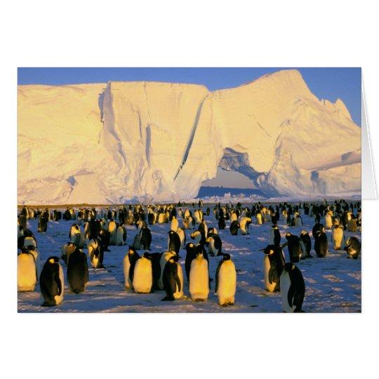 Antarctica, Antarctic Peninsula, Weddell Sea, 4 Card