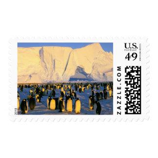 Antarctica, Antarctic Peninsula, Weddell Sea, 4 Postage Stamps