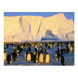 Antarctica, Antarctic Peninsula, Weddell Sea, 4 Postcard
