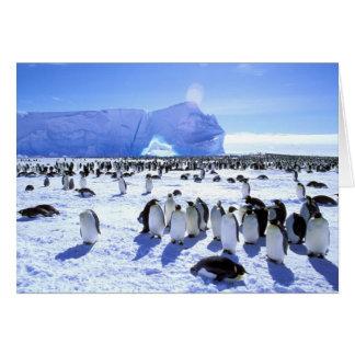 Antarctica, Antarctic Peninsula, Weddell Sea, 5 Greeting Card