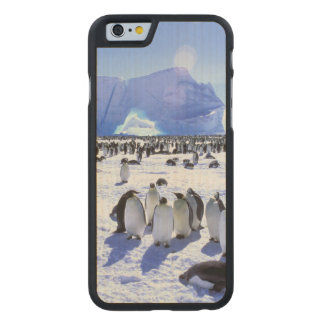 Antarctica, Antarctic Peninsula, Weddell Sea 5 Carved® Maple iPhone 6 Slim Case