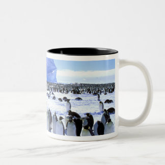 Antarctica, Antarctic Peninsula, Weddell Sea, 5 Mugs