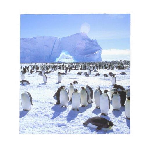 Antarctica, Antarctic Peninsula, Weddell Sea, 5 Memo Pad