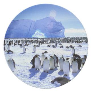 Antarctica, Antarctic Peninsula, Weddell Sea, 5 Party Plate