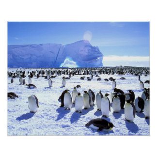 Antarctica, Antarctic Peninsula, Weddell Sea, 5 Poster