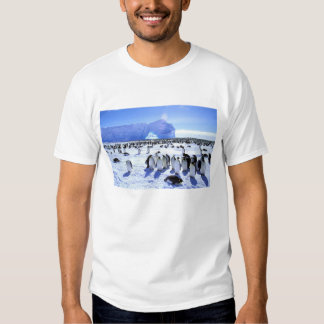 Antarctica, Antarctic Peninsula, Weddell Sea, 5 T Shirt