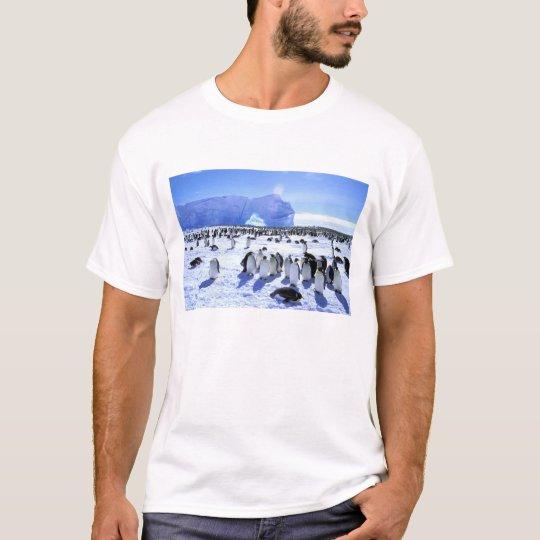 Antarctica, Antarctic Peninsula, Weddell Sea, 5 T-Shirt