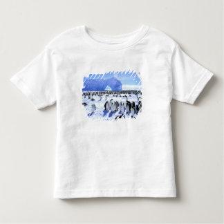 Antarctica, Antarctic Peninsula, Weddell Sea, 5 Toddler T-shirt
