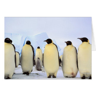 Antarctica, Antarctic Peninsula, Weddell Sea, Greeting Card