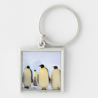 Antarctica, Antarctic Peninsula, Weddell Sea, Keychain