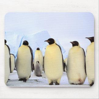 Antarctica, Antarctic Peninsula, Weddell Sea, Mouse Pad