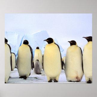 Antarctica, Antarctic Peninsula, Weddell Sea, Posters