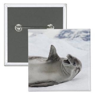 Antarctica, Antarctic Penninsula, Antarctic 2 Pin