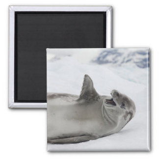 Antarctica, Antarctic Penninsula, Antarctic 2 Refrigerator Magnets