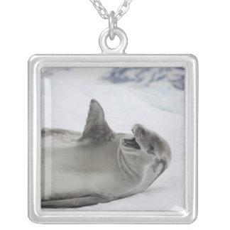 Antarctica, Antarctic Penninsula, Antarctic 2 Jewelry