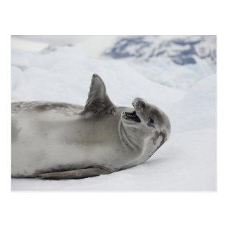 Antarctica, Antarctic Penninsula, Antarctic 2 Postcard