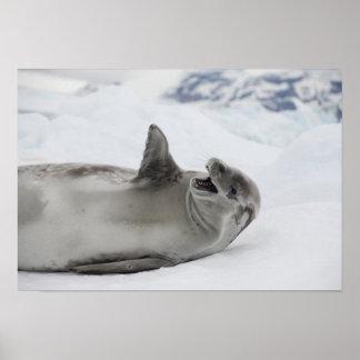 Antarctica, Antarctic Penninsula, Antarctic 2 Print