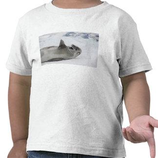 Antarctica, Antarctic Penninsula, Antarctic 2 T Shirt