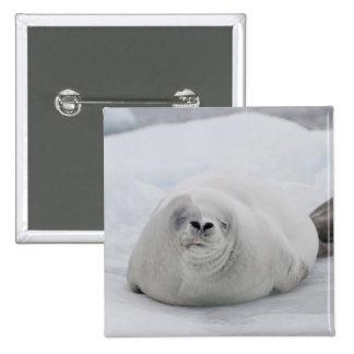 Antarctica, Antarctic Penninsula, Antarctic Pins