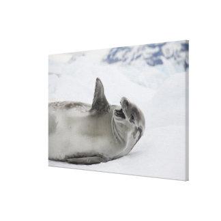 Antarctica, Antarctic Penninsula, Antarctic Gallery Wrap Canvas