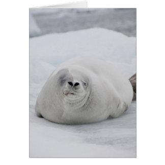 Antarctica, Antarctic Penninsula, Antarctic Cards