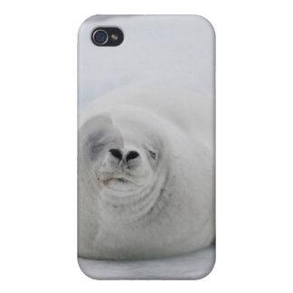Antarctica, Antarctic Penninsula, Antarctic Case For iPhone 4