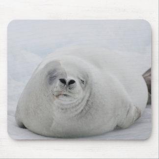 Antarctica, Antarctic Penninsula, Antarctic Mouse Pad
