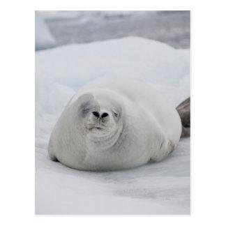 Antarctica, Antarctic Penninsula, Antarctic Postcard
