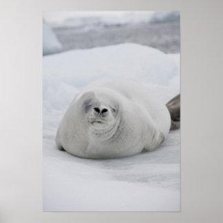Antarctica, Antarctic Penninsula, Antarctic Posters