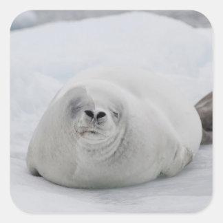 Antarctica, Antarctic Penninsula, Antarctic Sticker