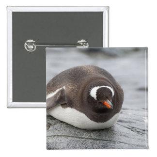 Antarctica, Antarctic Penninsula. Petermann Buttons