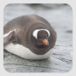 Antarctica, Antarctic Penninsula. Petermann Square Sticker