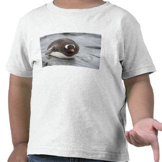Antarctica, Antarctic Penninsula. Petermann Shirt