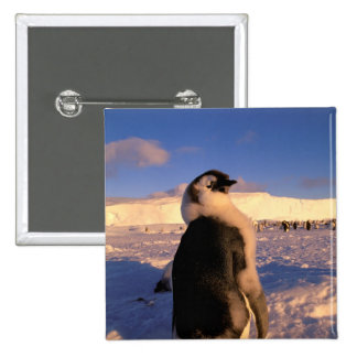 Antarctica, Australian Antarctic Territory, 2 2 Inch Square Button