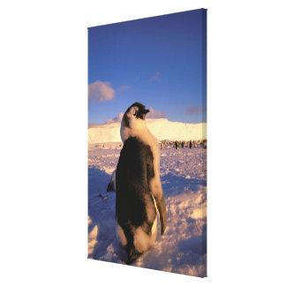 Antarctica, Australian Antarctic Territory, 2 Canvas Print