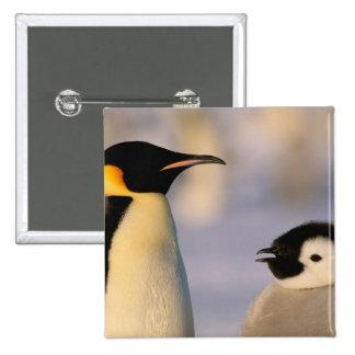 Antarctica, Australian Antarctic Territory, 2 Inch Square Button