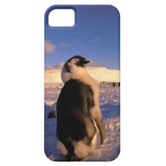 Antarctica, Australian Antarctic Territory, 2 iPhone SE/5/5s Case
