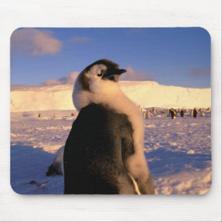 Antarctica, Australian Antarctic Territory, 2 Mouse Pad