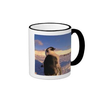 Antarctica, Australian Antarctic Territory, 2 Coffee Mugs