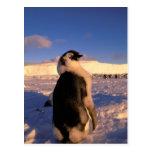 Antarctica, Australian Antarctic Territory, 2 Postcard